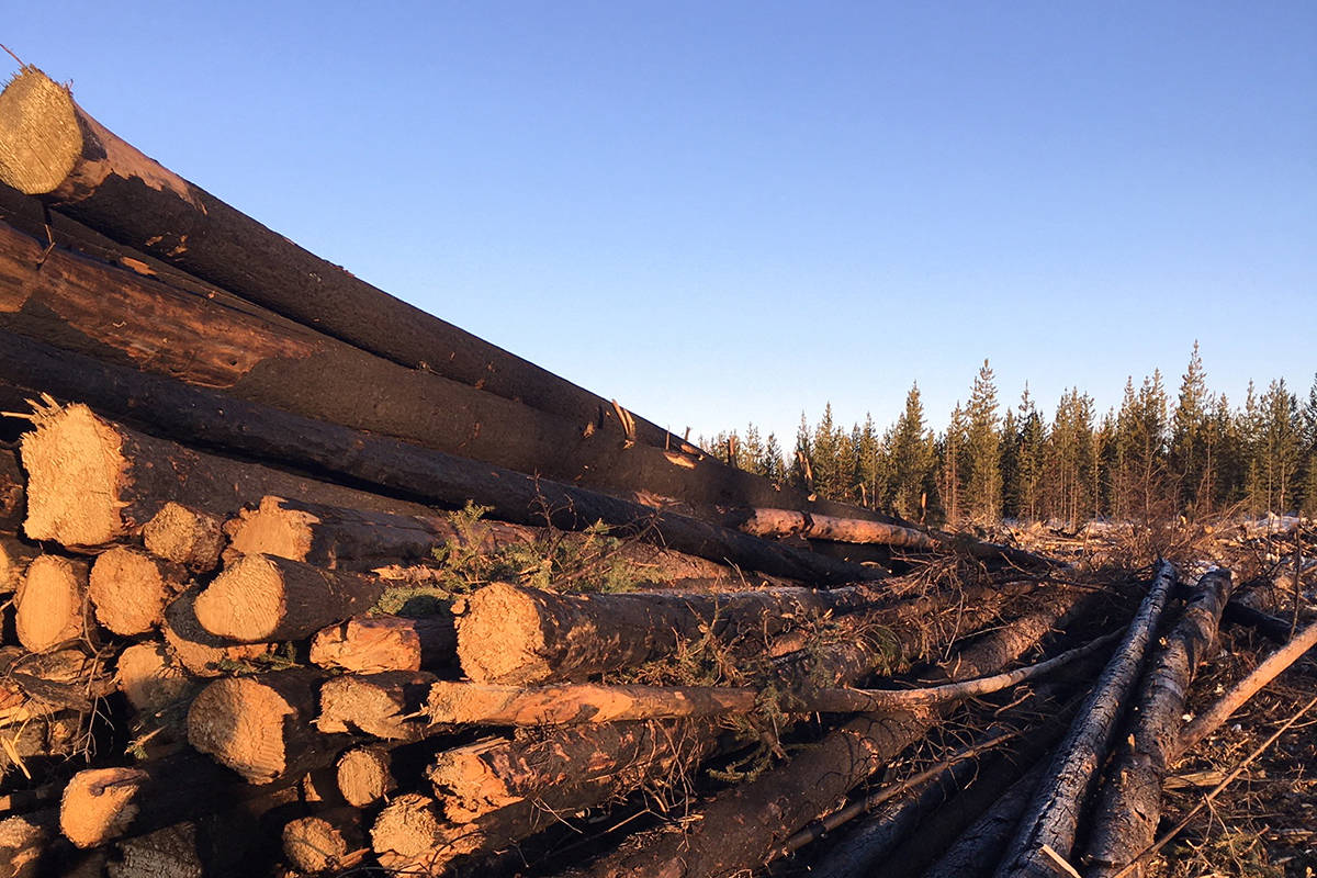 Cheslatta Carrier Nation received a grant in 2020 to help cover the costs of shipping fire-damaged trees to a pellet plant or bioenergy facility. (Forest Enhancement Society of B.C.)